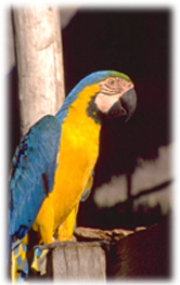 Safe bird toys to keep your pet company; buddy bird toys are made in Maui, Hawaii for your pet
